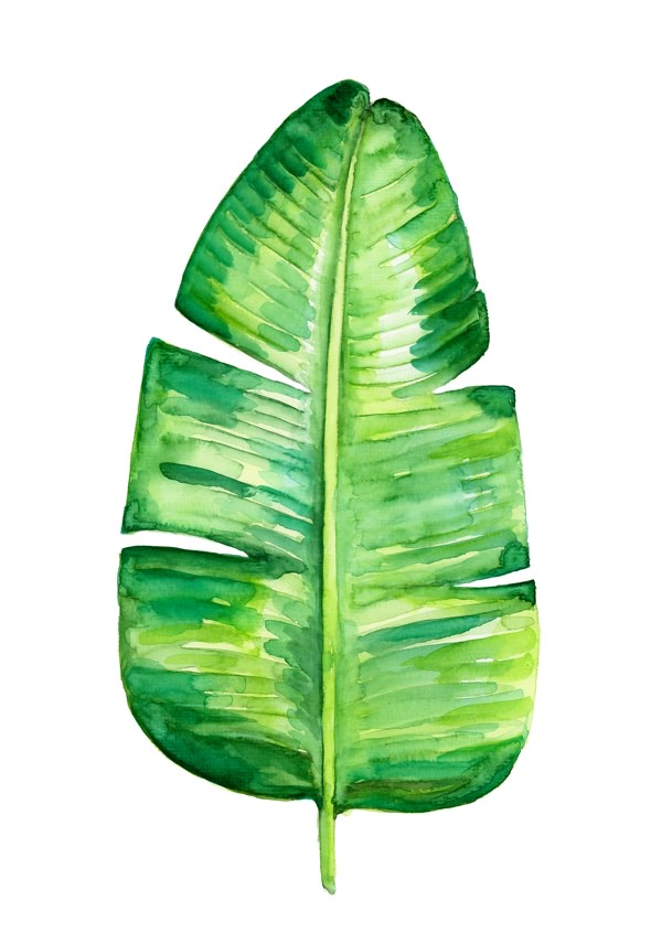 A4_Plant_01