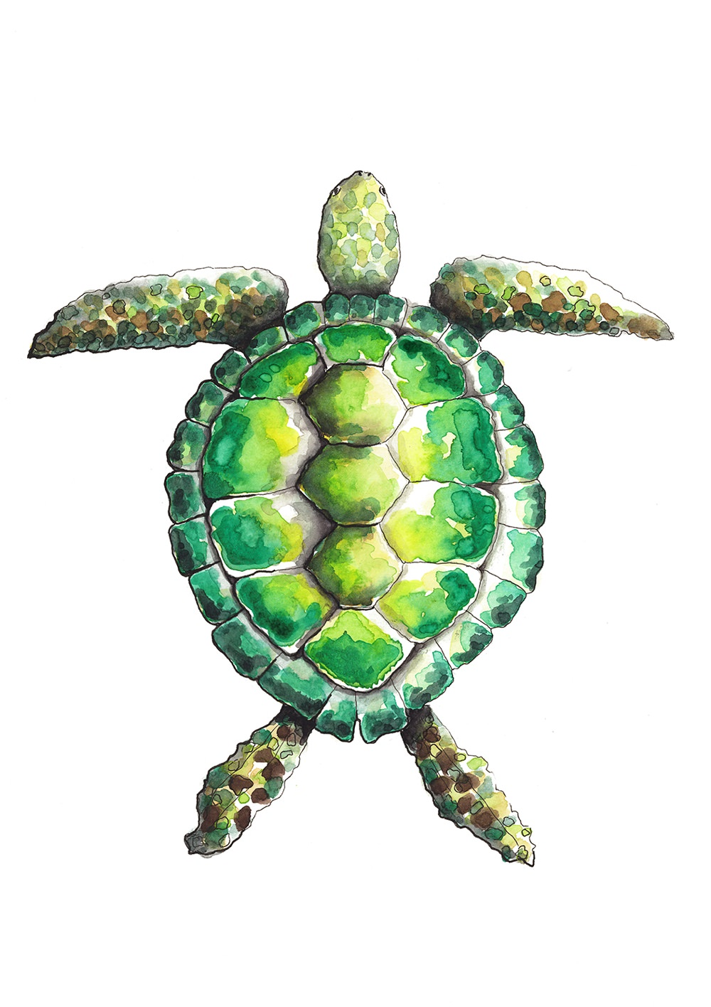 Turtle_A5